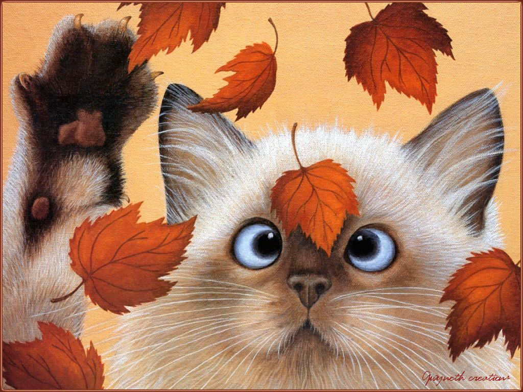 картинки з котом